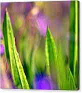Disco Grass Canvas Print