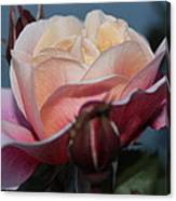 Distant Drum Rose Bloom Canvas Print