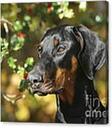 Dobermann Dog Canvas Print