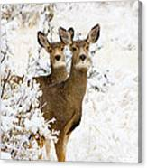 Doe Mule Deer In Snow Canvas Print