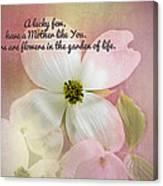 Dogwood Blossoms.  Canvas Print
