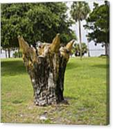 Dolphin Tree In Melbourne Beach Florida Canvas Print