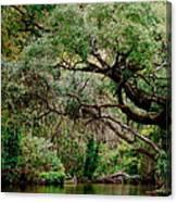 Dora Canal Tavares Florida Canvas Print