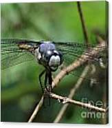 Dragonfly 71 Canvas Print
