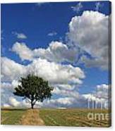Dramatic Clouds And The Tree Canvas Print