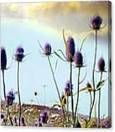 Dream Field Of Teasels Canvas Print