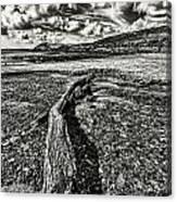 Driftwood Mono Canvas Print