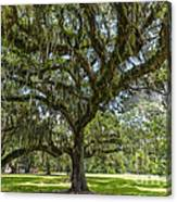 Dripping With Spanish Moss Canvas Print