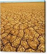 Dry Cracked Earth Canvas Print
