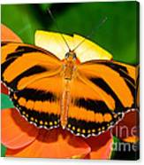 Dryadula Butterfly Canvas Print