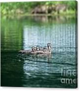 Duck Call Canvas Print
