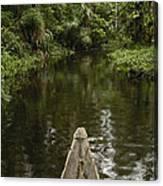 Dugout Canoe In Blackwater Stream Canvas Print