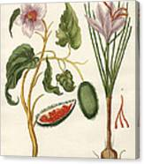 Dye Plants Canvas Print