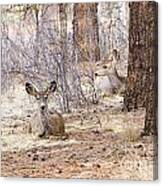 Easter Does Canvas Print