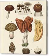 Eatable Mushrooms Canvas Print