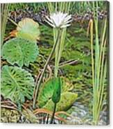 Emerald Lily Pond Canvas Print