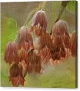 Enkianthus Bells Canvas Print