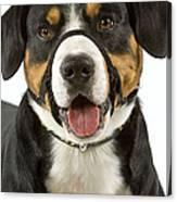 Entlebuch Mountain Dog Canvas Print