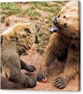 Eurasian Brown Bears Fighting Canvas Print