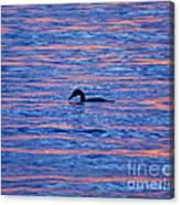 Evening Swim Canvas Print