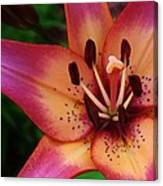 Explosion Of Color Canvas Print