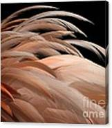 Fabulous Feathers Canvas Print