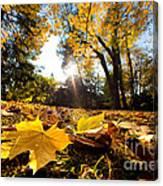 Fall Autumn Park. Falling Leaves Canvas Print