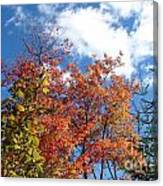 Fall Colors And Blue Sky Canvas Print