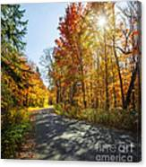 Fall Forest Road Canvas Print