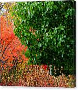 Fall Garden Canvas Print