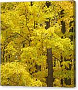 Fall Glory Canvas Print