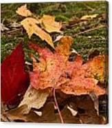 Fall Moss Carpet Canvas Print