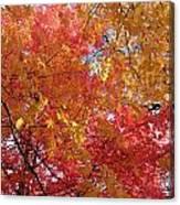 Fall Saint Louis 1 Canvas Print