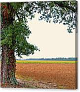 Farmland View Canvas Print