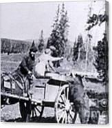 Feeding Bear Yellowstone National Park Canvas Print