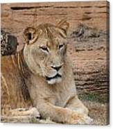 Female African Lion Canvas Print