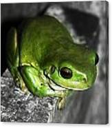 Fence Frog Canvas Print
