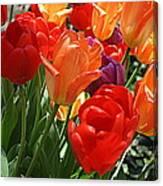 Festival Of Tulips Canvas Print