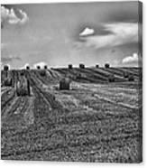 Fields Of Summer Canvas Print