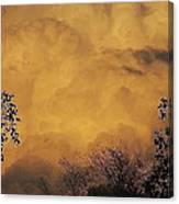 Film Noir Cornell Wilde Storm Fear 1956 Summer Storm Casa Grande Arizona 2004 Canvas Print
