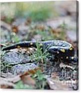 Fire Salamander Fog Droplets Canvas Print
