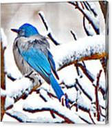 First December Snow Canvas Print