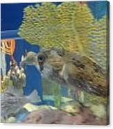Fish Canvas Print