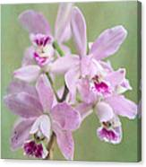 Five Beautiful Pink Orchids Canvas Print