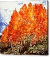 Flaming Aspens 2 Canvas Print
