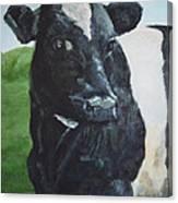 Flirtatious Cow Canvas Print