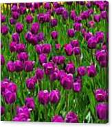 Floral Art Vi Canvas Print