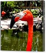 Florida Pink Flamingo Canvas Print