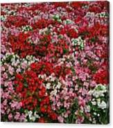 Flower Bed Canvas Print