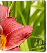 Flower Lily Background Canvas Print
